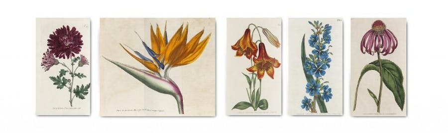 William Curtis - The Botanical Magazine or Flower-Garden displayed, London, Fry and Couchman, 1787-1835