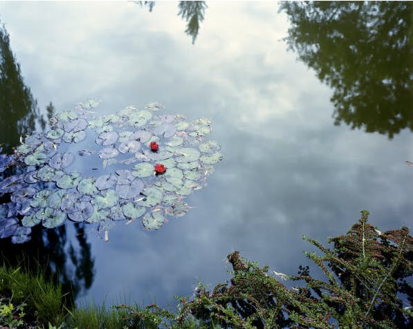 ©  Stephen Shore, 1982 , Giverny, France